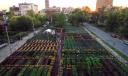 Городское сельское хозяйство: США готовятся выращивать еду в мегаполисах